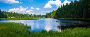 Metsäosaaja hoitaa metsiä ja ilmastoa