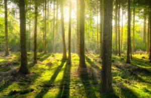 Sitran Mari Pantsar: Hiilen hinnoittelu vauhdittaisi uusiutuvien puutuotteiden markkinaa EU:n elvytysvaroja metsäpohjaisten tuotteiden ja ratkaisujen edistämiseen