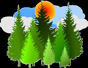 Metsäteollisuuden ilmastotiekartta arvioi myös toimialan laajat ilmastohyödyt – Metsäteollisuudella kokoaan merkittävämpi rooli ilmastonmuutoksen hidastamisessa