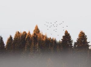 Metsämittarissa metsien monimuotoisuus, ekosysteemipalvelut ja puuntuotanto samaan kuvaan