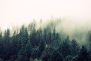 Uusiutuva metsä, maaseutu ja elintarvikkeet Kasvupolulle monipuolinen joukko yrityksiä