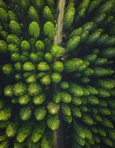 Metsiä hoitamalla hiilivarasto vahvaan kasvuun ja raaka-ainetta fossiilisia korvaaville tuotteille
