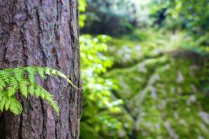Metsä Board aloittaa valmistelut Husumin tehtaan ympäristöluvan uudistamiseksi