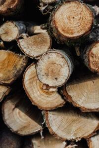 Digityökaluilla metsien puustosta entistä tarkempaa tietoa