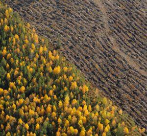 WWF haastaa 600 kuntaa ja seurakuntaa vastuulliseen metsänhoitoon: Varsinais-Suomelle satelee kehuja