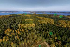 Metsäbiotalouden näyteikkuna tuo tutkimustiedon kaikkien ulottuville – virtuaalisesti ja konkreettisesti