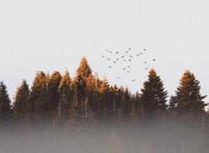 Metsätalouden suojavyöhykkeiden mallintamiseen uusi työkalu