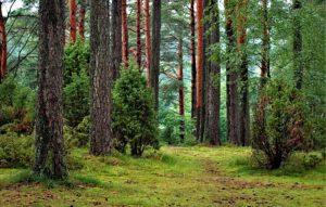 Suomen, Mainen ja Michiganin yhteistyöllä kohti metsäbiotalouden kestävää kasvua