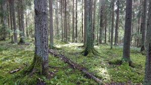 Säätiölle kolme metsää perintönä Sipoosta