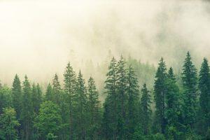 Yli puolet suomalaisista kannattaa metsänomistamista – enemmistö sijoittaisi omaan metsäpalstaan