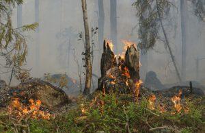Muuttuva ilmasto ja kaupungistuminen lisäävät suurten metsäpalojen riskiä myös Suomessa