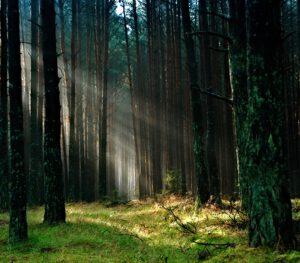 Yllättikö nälkä keskellä metsää? Hyvät eväät kruunaavat retken