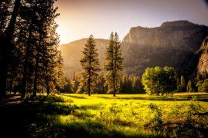 Yli 770 hehtaaria arvokkaita suo- ja metsäalueita suojeluun Pohjois-Karjalassa