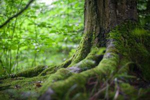 Metsien harvennusmallituudistetaan–taustalla tarve ilmastokestäväänmetsänhoitoon