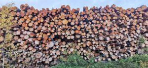 Energiapuun kriteeristöä on tiukennettava: Nyt poltettavaksi päätyy jopa yli 300-vuotiasta puuta